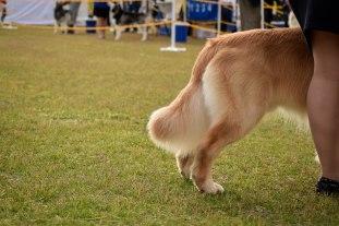 Dog Show Edited - 1