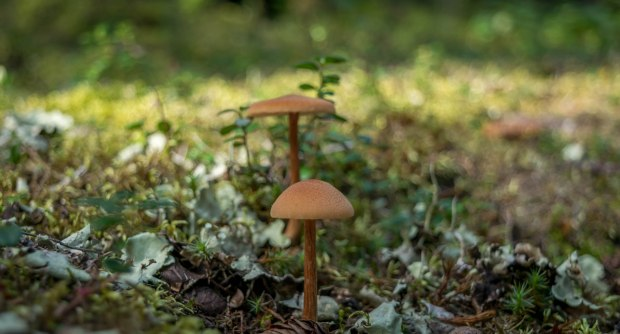 shroomspiration-9