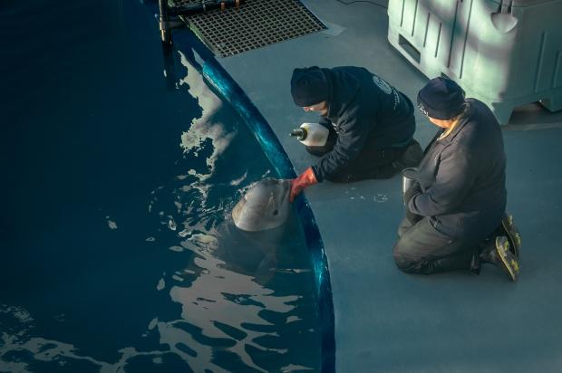 Baby Beluga - 6