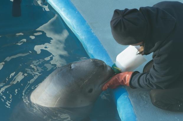 Baby Beluga - 9