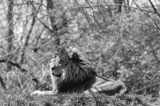 Pittsburgh Zoo Walkthrough - 5 B&W