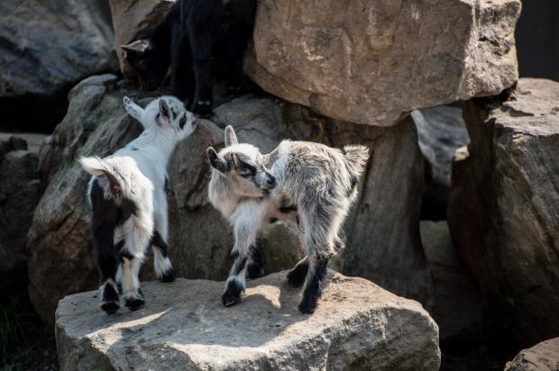 Living Treasures Animal Park - 5