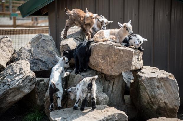Living Treasures Animal Park - 6